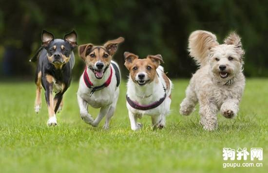 带狗狗去旅行之前要做的五个准备工作